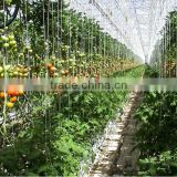 Eco-Friendly Natural Raw Spun Jute Twine for Tomato Green House