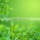 Factory Supplied Food Grade Peppermint Oil Flavor, Concentrated Liquid Food Flavoring For Chewing Gum
