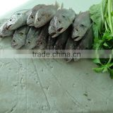 best price Chinese frozen fish surimi to make fish ball