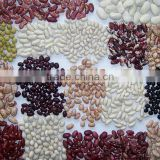Chinese Red Kidney Bean Original Wholesales Price