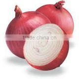 Best Onion In India