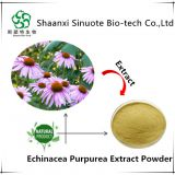 Natural Echinacea Purpurea Extract 4% Polyphenols