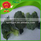 wholesale factory price China Fresh Broccoli green broccoli