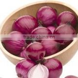 red onion exporters india