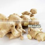 fresh/dried ginger
