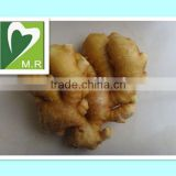 Full Stock plant extract ginger extract