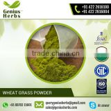 Organic Material made Wheat Grass Powder for Bulk Sale at Market Price