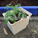 2016 NEWdutch bucket Hydroponics for hothouse garden for greenhouse/indoor planting system/garden decoration/