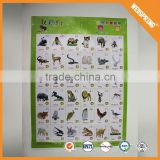 Famous plastic wholesale anatomy wall chart