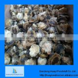price of moon snail