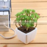 succulent plants tropical plants Artificial Succulent plants with pot, potted plastic plant