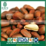 Continous Supply Snack Foods New Crop Siberian Open Pine Nuts in Shell