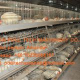 Colombia Broiler Poultry Farm - A Type Battery Broiler Cage System & Battery Meat Chicken Cage with Automatic Feeding Machine for Farmer