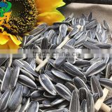 New Crop Chinese Sunflower seed 5009/3638/0409/103/601 for bird big size