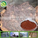 GMP factory and free sample 100% natural plant extract polysaccharide chaga mushroom powder