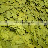 Bay Leaf Manufacturer Dry
