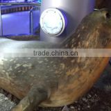 VGD-647 Simulation Animal life size fiberglass sea lion