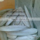 High Quality Cuttlefish Bone at Best Price.......