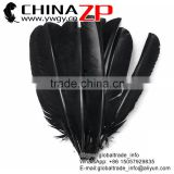 CHINAZP Cheapest Plumage Natural Dyed Black Turkey Pointers Quill Large Feathers Pens for Sale
