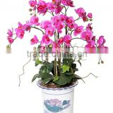 Artificial pink butterfly orchids flower bonsai