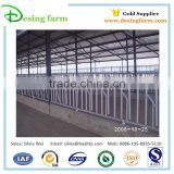 Hot sale 5 heads cattle headlock for dairy farm