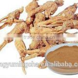 Angelica Sinensis Extract Fight againt Oxydation