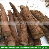 High quality lumber paulownia hybrid tree root system