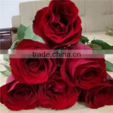 Export rose fresh cut flowers from Yunnan of China