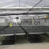 the cheapest agricultural hot sale plastic film greenhouse
