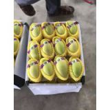 Sell Fresh Cat Chu/ Cat Hoa Loc Mango - Good Price