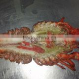 frozen cooked /raw lobster