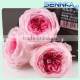 Wholesale Natural Flowers Preserved Austin Rose Head for Wedding Decoration 4-5cm Rose Head 8 pcs/box