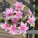 Real Touch Artificial Pink Silk Lily flower Wholesale