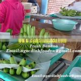 BEST QUALITY VIETNAM FRESH CAVENDISH BANANA