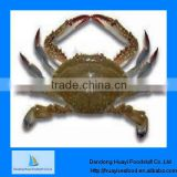 frozen crab blue swimming live crab seafood