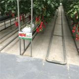 Hydroponic Glass Greenhouse for Cherry Tomato/Cucumber Cultivation