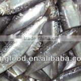 Hot selling frozen whole sardine frozen fish