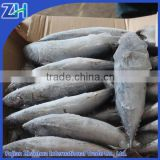 Frozen bonito tuna fish price on sale, tuna for canned