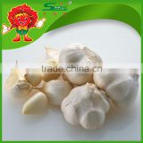 Chinese high quality fresh pure white garlic fresh ginger and garlic