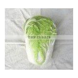 SPRING FRESH CHINESE CABBAGE