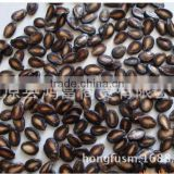 Xinjiang black watermelon seeds for importers