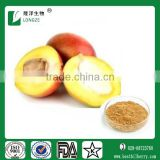 African Wild Mango seed extract 4:1,10:1 and protein 10%-50%