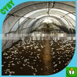 agriculture plastic black and white film for mushroom shading/panda film for mushroom shed covering