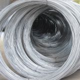 Electro Galvanized Iron Wire for Saudi Arabia Market