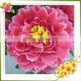 china natural brilliance silk peonies wholesale