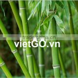 Vietnam Natural Bamboo Pole