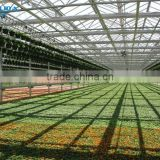 baolida multi-span greenhouse PE film green house used greenhouse for tomato