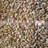 JSX organic and common dried red sparkle kidney bean wholesales size 220 affordable price food grade LSKB