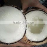 VIETNAM TENDER COCONUT