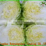 (HOT) Fresh cabbage export South Korea/cabbage